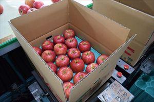 りんごの出荷を見てきたんだっし!