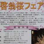 13日(土)・14日(日)に啓翁桜フェアが開催されるんだっし!