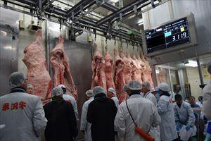 """米沢牛枝肉市場をはじめて見てきたんだっす! 迫力のある枝肉に興奮。その後冷えた体に""""あったかもつ煮込み""""染みるぅー"""