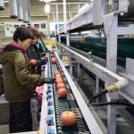 平成30年の「園芸広域集出荷施設」稼働は終了。一年の稼働について振り返る。
