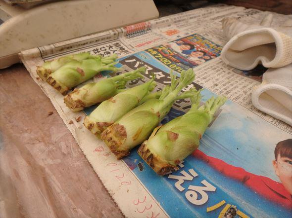 タラの芽給食